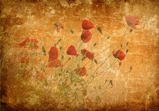 Poppies on a grunge background Stock Photography