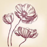 Poppies hand drawn vector llustration ketch Stock Photos