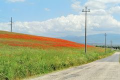 Poppies hill. Poppies field and a road in Italy Stock Photography