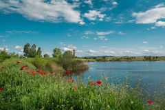 Poppies on a lake Royalty Free Stock Photo