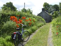 Poppies in the lane. Poppies in the lane to the old farm house, with bike in the foreground Royalty Free Stock Images