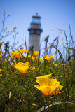 Poppies and Lighthouse Royalty Free Stock Photo