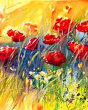 Poppies in the meadow Royalty Free Stock Photos