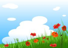 Poppies Meadow  background. Summer grassy field and Poppies flowers background Royalty Free Stock Photo