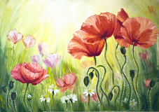 Poppies in the morning Stock Photography