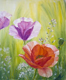 Poppies in the morning. Oil painting on canvas royalty free illustration