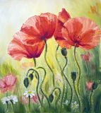 Poppies in the morning. Oil painting on canvas stock illustration