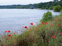Poppies at Natchez under the Hill by the mighty Mississippi River Royalty Free Stock Photos