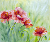 Poppies, oil painting. On canvas