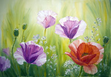 Poppies , oil painting on canvas. Poppies at the sunrise , oil painting on canvas vector illustration