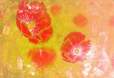Poppies on the old grunge texture Stock Photo