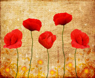 Poppies on an old paper. Poppies on an old, vintage paper with gold decorations Royalty Free Stock Image