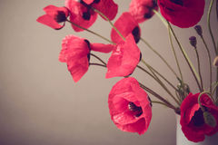 Poppies over vintage background with retro filter effect. Selective focus on one flower Royalty Free Stock Images