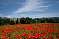 Poppies in provence #2. Huge field of poppie with sainte victoire mountain in background Royalty Free Stock Image
