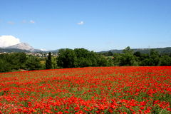 Poppies in provence. Huge field of poppies with sainte victoire mountain in background Royalty Free Stock Image