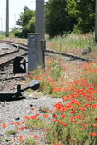 Poppies beside railway tracks Royalty Free Stock Photos