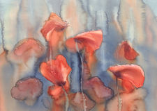 Poppies in the rain watercolor Stock Photography