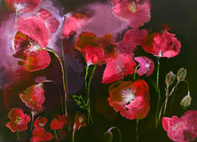 Poppies in red and black. Royalty Free Stock Photo