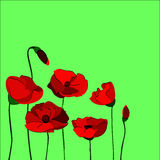 Poppies. Red flowers poppies on green background Stock Photos