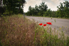 Poppies on roadside Royalty Free Stock Photos