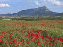 Poppies and the rock Oroel in Huesca. Stock Photo