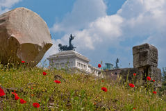 Poppies in rome. Made in the heart of ancient Rome. These flowers were among the ancient buildings Stock Photography