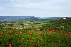 Poppies in Roussillon Royalty Free Stock Photos