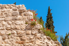 Poppies on Ruins Temple of Serapis in Jerusalem Stock Image