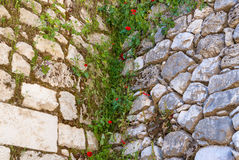 Poppies on Ruins Temple of Serapis in Jerusalem. Israel Royalty Free Stock Photo