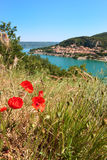 Poppies at the Saint Croix lake Stock Photos