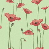 Poppies seamless background Stock Image