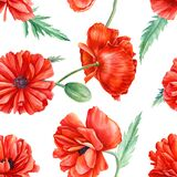 Poppies, seamless flower patterns, watercolor floral design on a white background, hand drawing