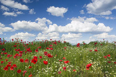 Poppies, sky, clouds Stock Photo