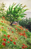Poppies on a slope. Stock Photography