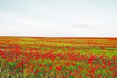 Poppies. In the Spanish countryside to saragozza Stock Photos