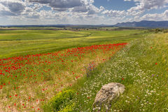 Poppies and stone in Andalusia Stock Photo
