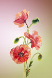 Poppies. Summer flowers invitation Royalty Free Stock Photos
