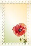 Poppies. Summer flowers invitation Stock Photography