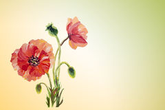 Poppies. Summer flowers invitation Royalty Free Stock Photography