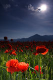 Poppies and Sun. Poppy flowers and blue sky with the sun Stock Photo