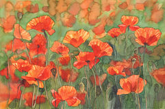 Poppies sunny field watercolor background Stock Photography