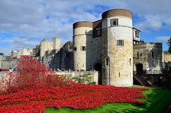 Poppies at the Tower 2. Blood Swept Lands and Seas of Red. Poppies at the Tower of London Royalty Free Stock Image