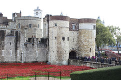 Poppies at Tower of London stock photo