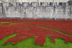 Poppies at the Tower of London Stock Photos