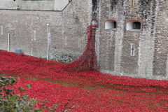 Poppies at The Tower of London London UK Stock Images