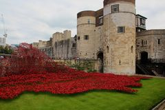Poppies at the Tower of London royalty free stock photography