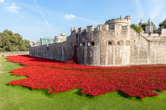 Poppies at the Tower of London. Royalty Free Stock Photo