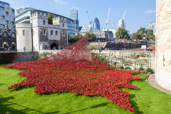 Poppies at the Tower of London. Stock Images