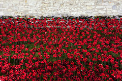 Poppies at the Tower of London Stock Photography