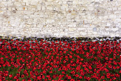 Poppies at the Tower of London Royalty Free Stock Image